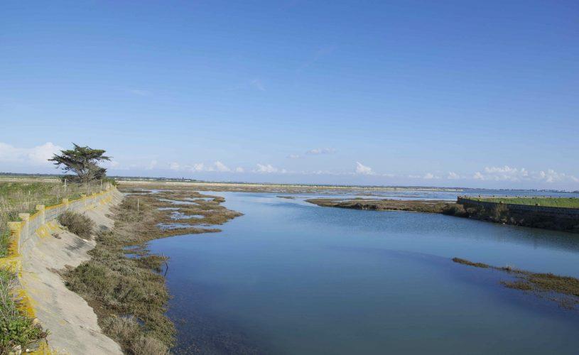 Les marais - Ile de Ré